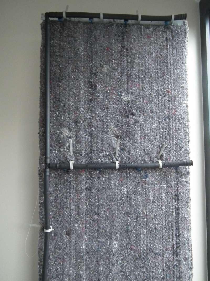 Phill : mon Premier mur végétal  Dscf1515