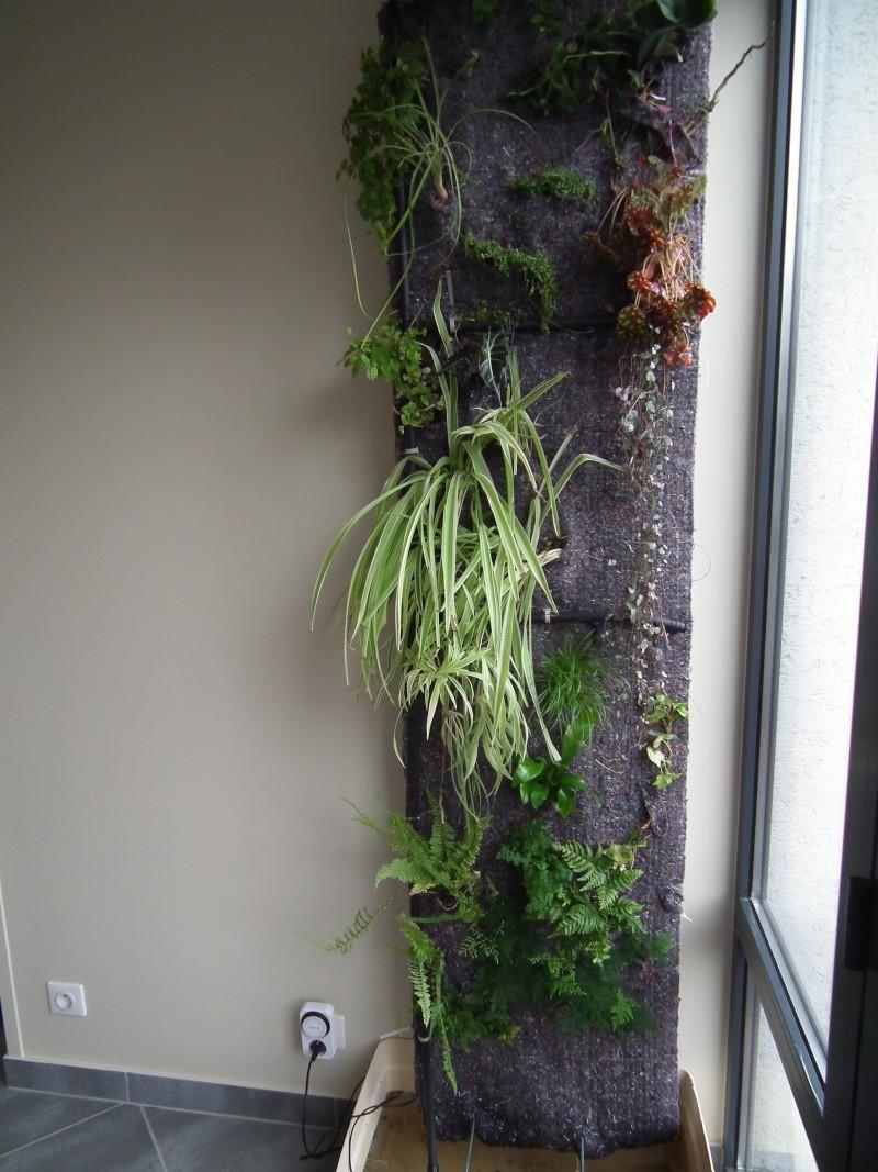 Phill : mon Premier mur végétal  Dscf1518