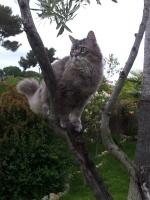 mon chat adoré Titus a disparu Mon_ch10