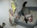 [Animaux] Photos de vos animaux - Page 2 013_co10