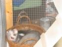 [Animaux] Photos de vos animaux - Page 2 043_co10