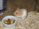 [Animaux] Photos de vos animaux - Page 2 070_co10