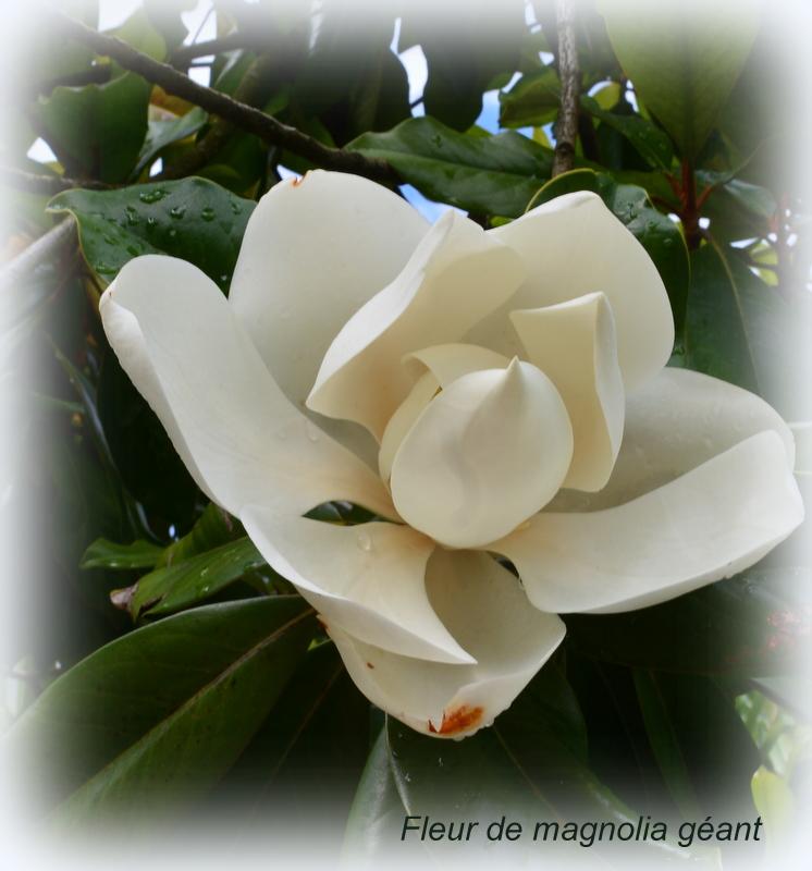 5 juillet : une ou des fleurs Dsc_3210