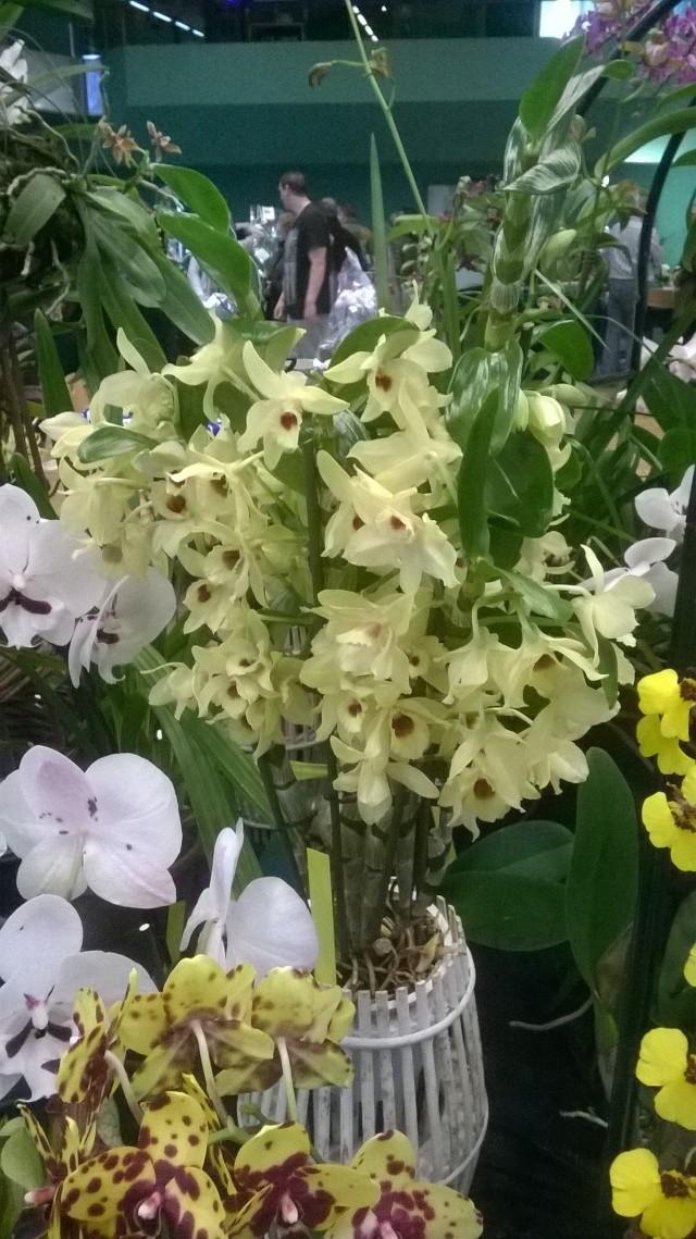 Expo d'orchidées en Auvergne , ENFIN!!!!!!!!!!!!!!!! Wp_20114