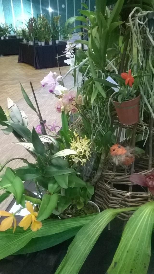 Expo d'orchidées en Auvergne , ENFIN!!!!!!!!!!!!!!!! Wp_20115