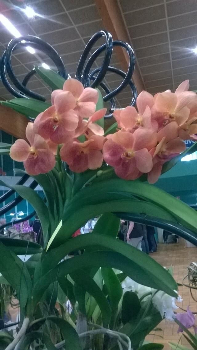 Expo d'orchidées en Auvergne , ENFIN!!!!!!!!!!!!!!!! Wp_20116