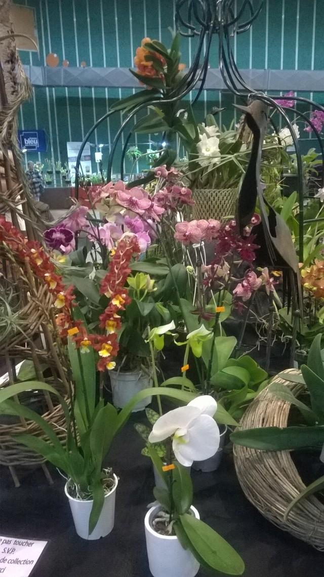 Expo d'orchidées en Auvergne , ENFIN!!!!!!!!!!!!!!!! Wp_20120