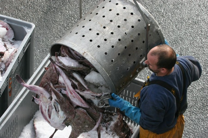 Retour de pêche au Guilvinec Img_3611