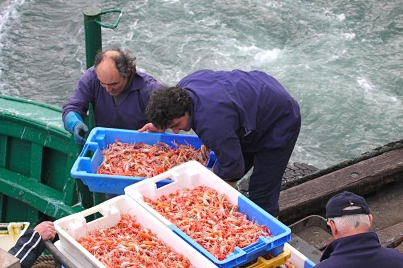 Retour de pêche au Guilvinec Img_6310