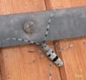 Thème du mois d'août 2013 : les insectes Signa10