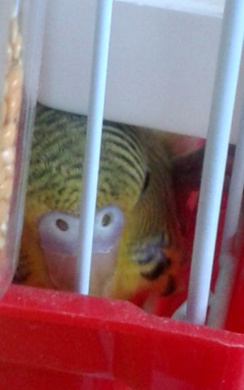 Ma petite Leelo 20120913