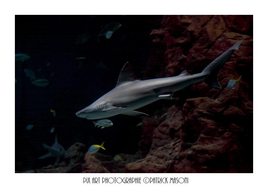 Un après midi à l'aquarium - Page 3 Pixart13