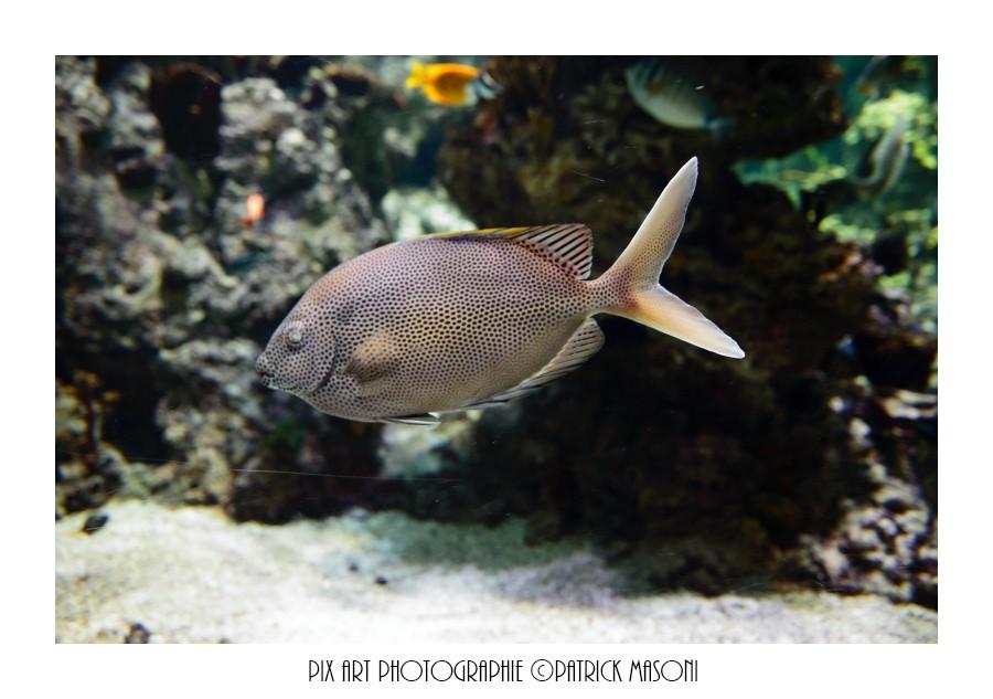 Un après midi à l'aquarium - Page 3 Pixart14