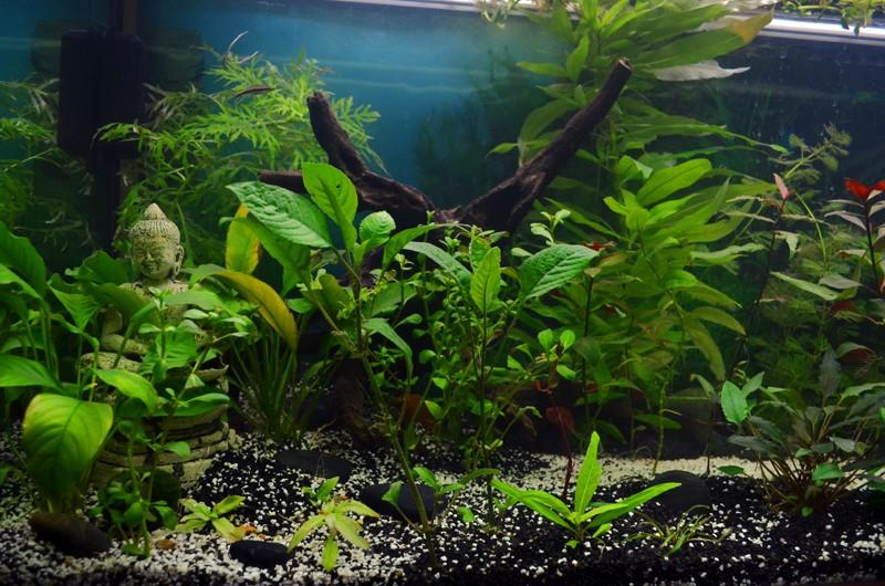 Mes aqua  Aqua510