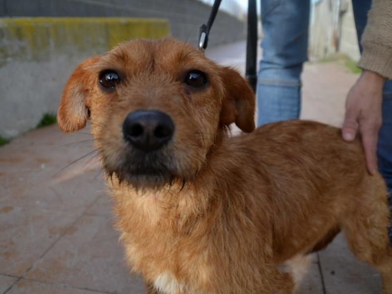 Ardilla petite croisée  à l'adoption Scooby France Adoptée  Ardill10