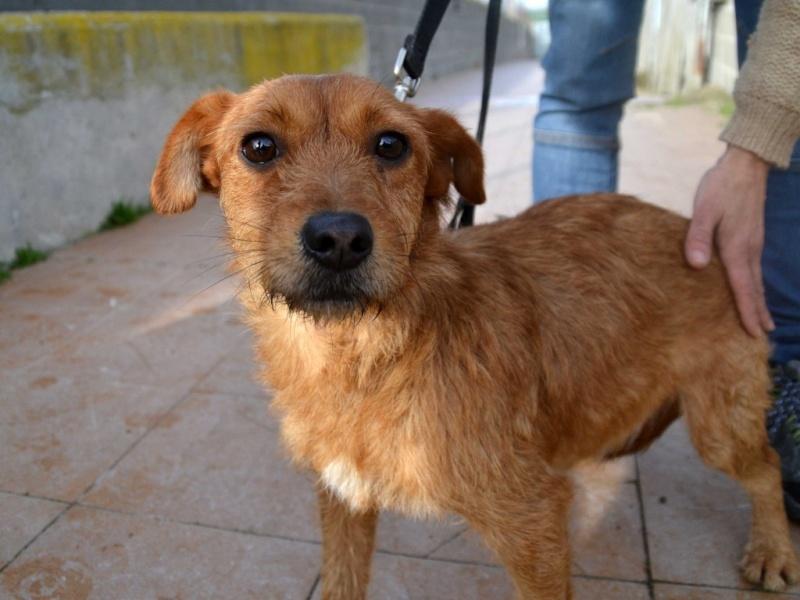 Ardilla petite croisée  à l'adoption Scooby France Adoptée  Ardill11