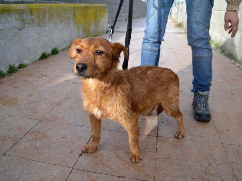 Ardilla petite croisée  à l'adoption Scooby France Adoptée  Ardill12