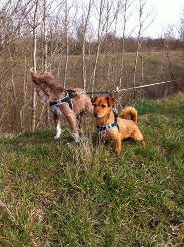 Ardilla petite croisée  à l'adoption Scooby France Adoptée  Ardill14