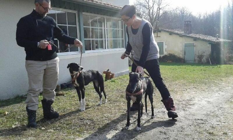 """Cereza galguita avec une patte cassée Scooby France""""  Adoptée  - Page 4 Cereza11"""