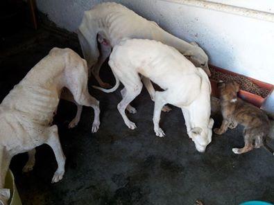 juanita galga mature à l'adoption   Adoptée - Page 2 Juanit16