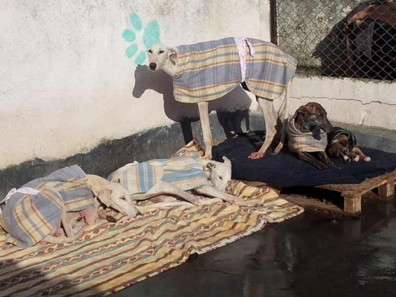 juanita galga mature à l'adoption   Adoptée Juanit17