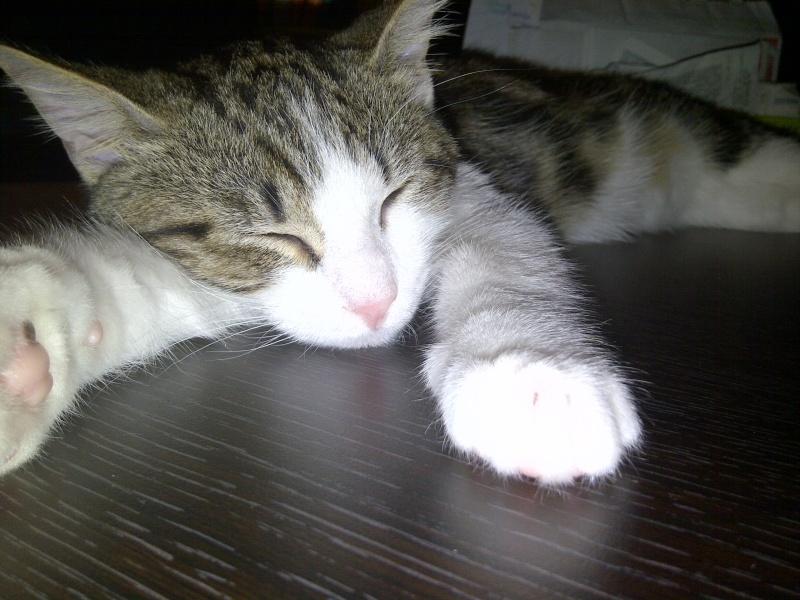 Heiko beau chaton tigré et blanc - BEUVRAGES Img-2011