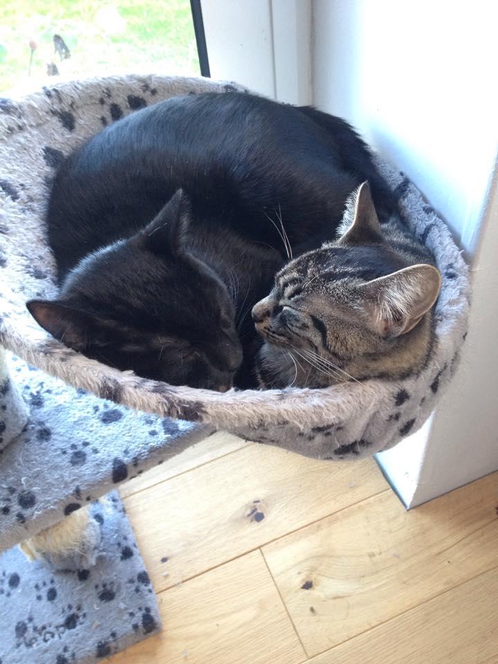 Joke et Jazzy, 2 petits coeurs tout doux et câlins Joke_e11