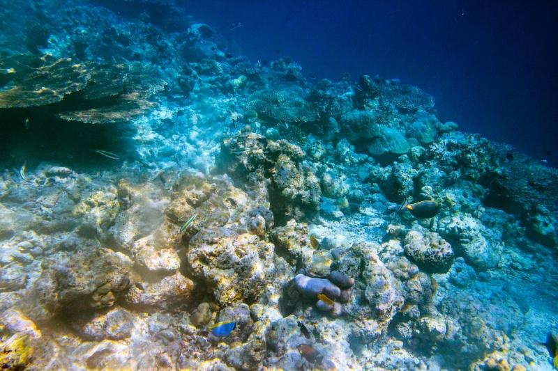 Quelques photos de mes dernières vacances (Maldives) 2013_111