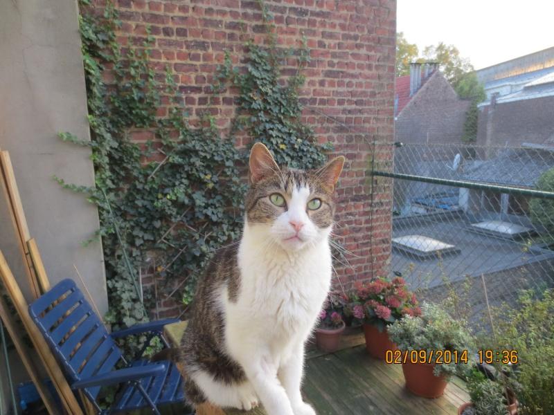 Mon chat a une ostéomyélite suite à un abcès dentaire - qui connait cette pathologie ? 02_09_10