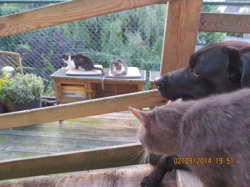 Mon chat a une ostéomyélite suite à un abcès dentaire - qui connait cette pathologie ? 02_09_12