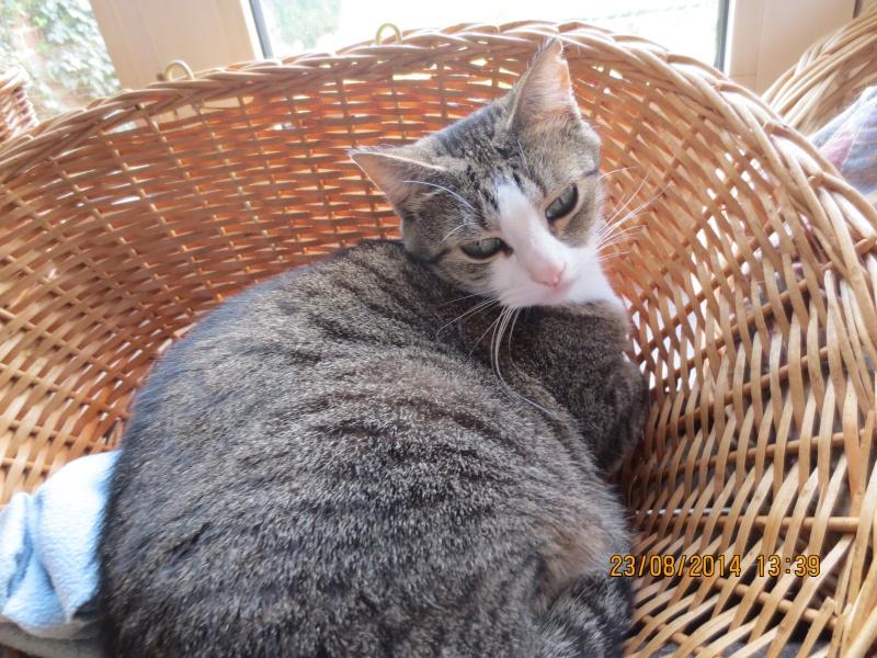Mon chat a une ostéomyélite suite à un abcès dentaire - qui connait cette pathologie ? 23_08_10