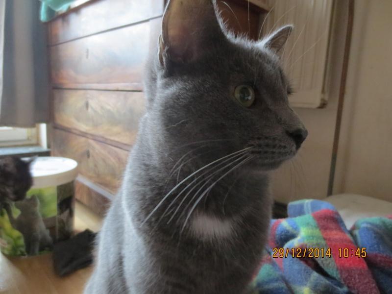 Mon chat a une ostéomyélite suite à un abcès dentaire - qui connait cette pathologie ? Img_0910