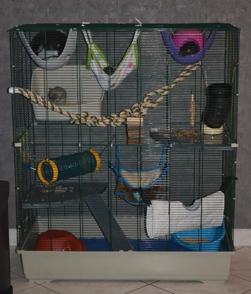 VENDUE - A CLÔTURER ! Grande cage Marchioro (57) 0_168910
