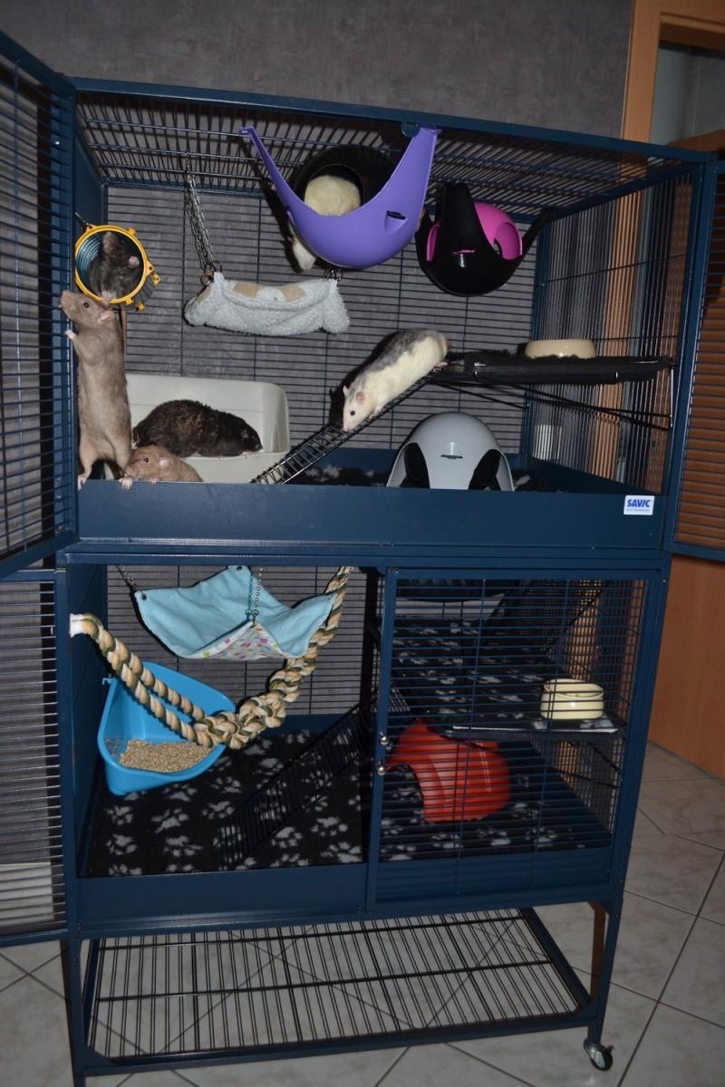 Photos de vos cages - Page 3 0_263610