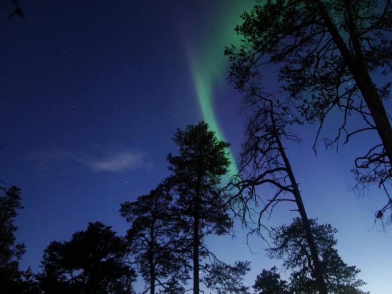 Un peu de Laponie a la periode du Ruska... Aurore10