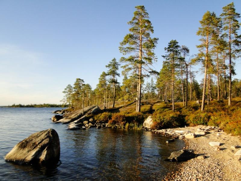 Un peu de Laponie a la periode du Ruska... Rivage11