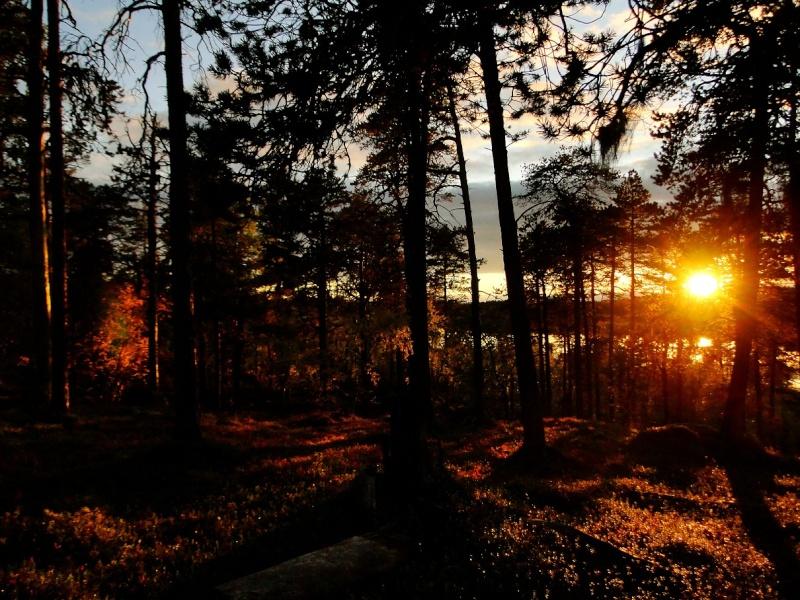 Un peu de Laponie a la periode du Ruska... Sunset10