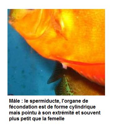 Mâle ou femelle ? :) Myle10