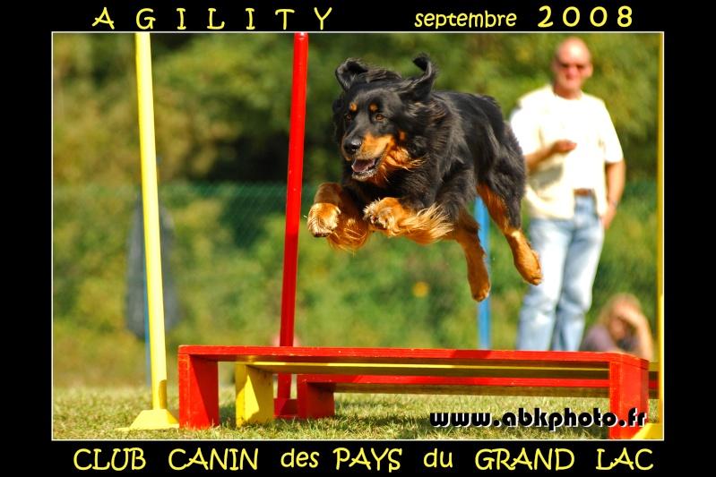Encore l'agility - Page 3 Dsc_2810