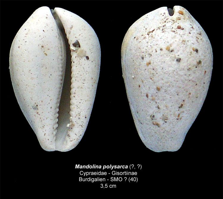 Gastéropodes burdigaliens du S.O. Mandol13
