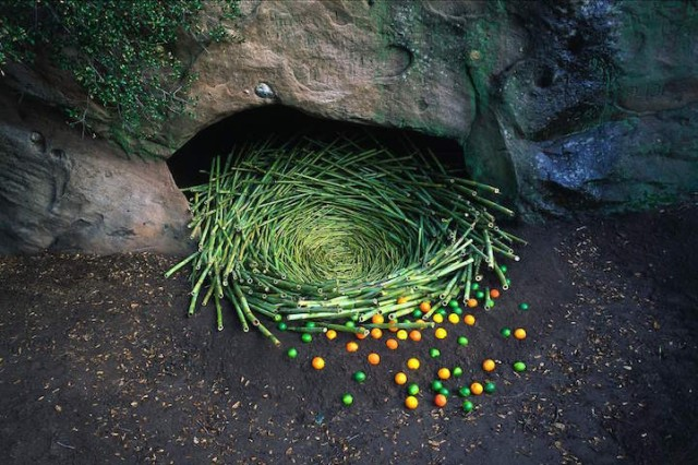 [Land Art] Andy Goldsworthy, Nils-Udo... [INDEX 1ER MESSAGE] - Page 5 A236