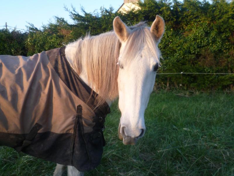 Couverture cheval impérméable P1060210