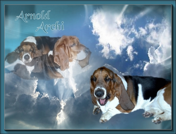 créer un forum : basset hound aventures - Portail Hommag10