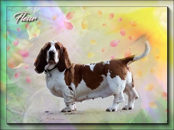créer un forum : basset hound aventures - Portail Hommag12