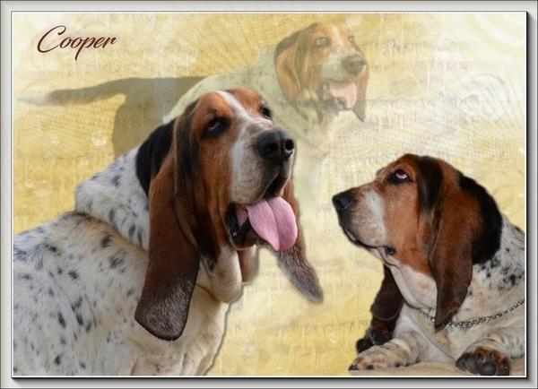 créer un forum : basset hound aventures - Portail Hommag13