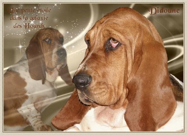 créer un forum : basset hound aventures - Portail Hommag14