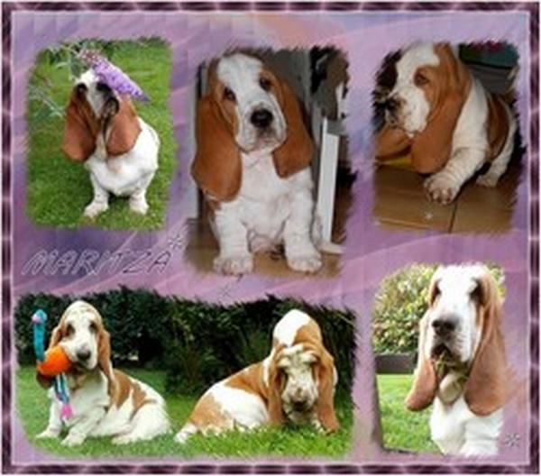 créer un forum : basset hound aventures - Portail Hommag15