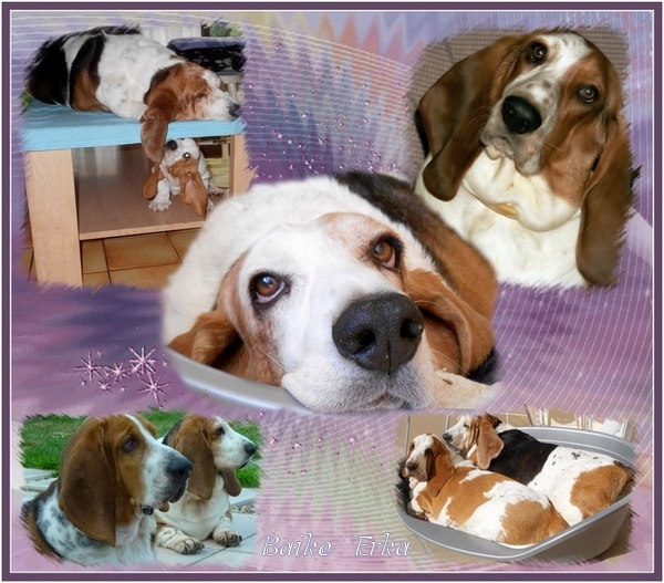 créer un forum : basset hound aventures - Portail Hommag16