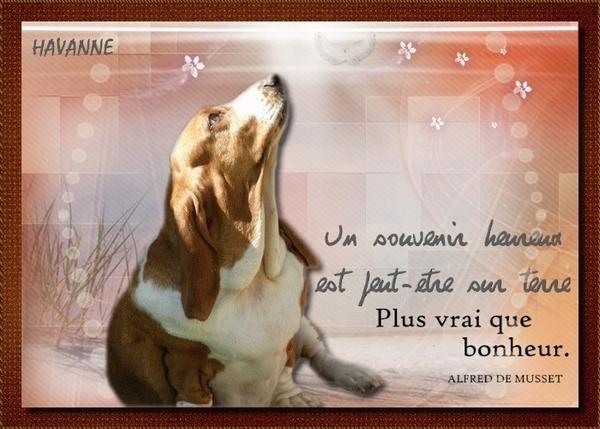 créer un forum : basset hound aventures - Portail Hommag18