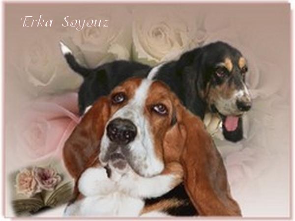 créer un forum : basset hound aventures - Portail Hommag19